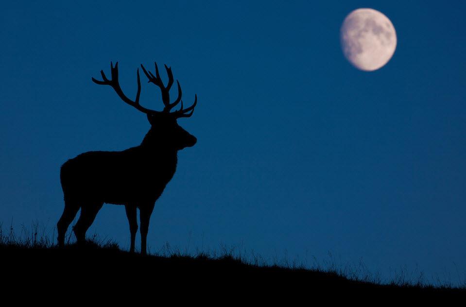 time deer hunting