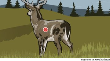 Where to Shoot a Whitetail with a Bow