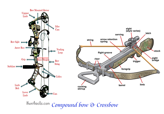 Compare compound bow vs crossbow
