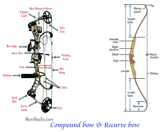 Compare compound bow vs Recurve bow