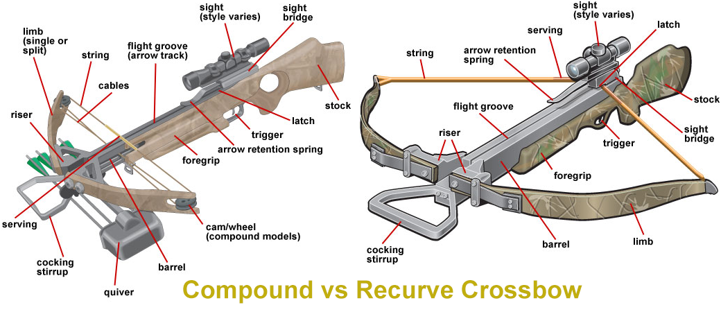 Compound vs Recurve Crossbow