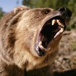 Bear Safety When You Go Hiking
