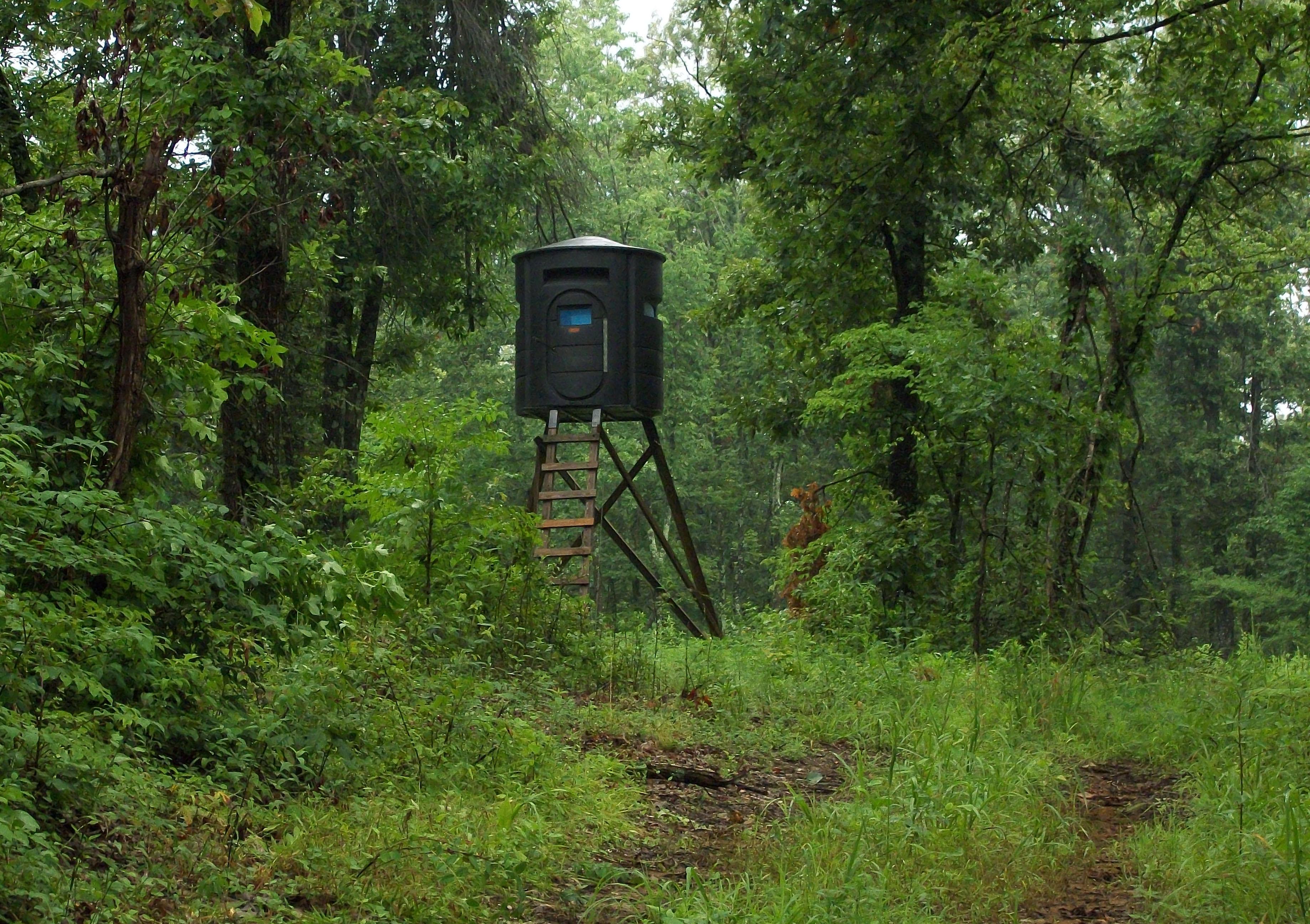 Whitetail deer hunting land