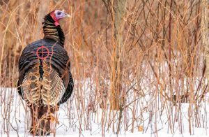 Hit the Spine Turkey Hunting