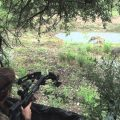 kinetic energy deer hunting
