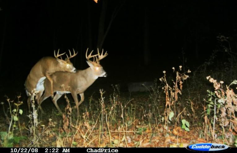 Flash trail Cameras