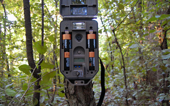 Batteries for Trail Cameras